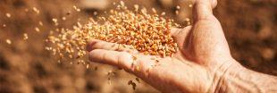 Où acheter des semences paysannes ?