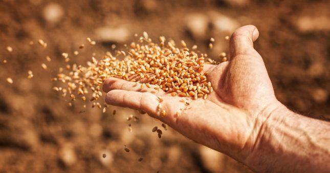 Où acheter des semences paysannes?