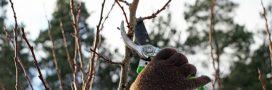 Taille des arbres fruitiers: tous les conseils pour bien s'y prendre