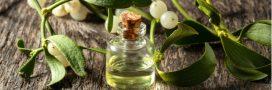 Vive le gui, plante sacrée pour se soigner tout au long de l'année!