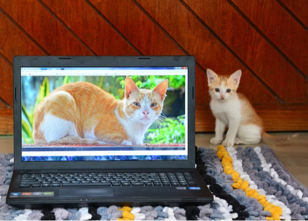 vente en ligne animaux