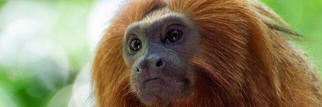 One Planet Summit: un million d'espèces animales et végétales en danger