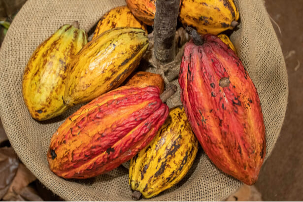 cacao equitable