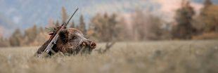 L'indicible cruauté de la chasse au ferme ou le sadisme sur sanglier mourant