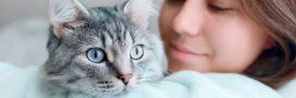 Les chats nés après 2012 doivent désormais être identifiés, c'est obligatoire!