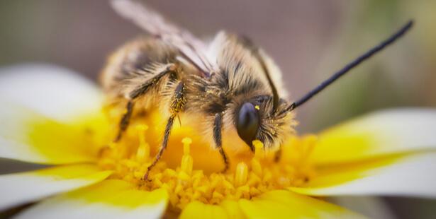famille abeille
