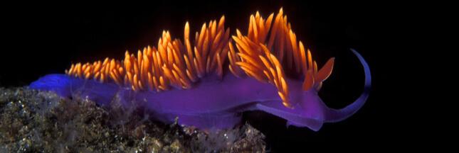 Limace de mer : 5 photos aussi splendides qu'intrigantes