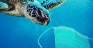 Masques jetables dans la nature : les animaux sont en danger