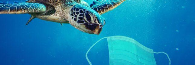 Masques jetables dans la nature: les animaux sont en danger