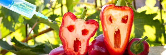 Miam, des centaines d'OGM dans nos assiettes selon la DGCCRF