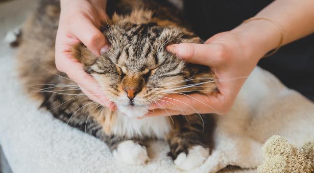 ostéopathe pour chat,