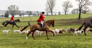 Loi sur le bien-être animal : la chasse et la Corrida absentes des débats