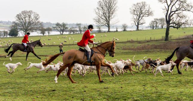 Loi sur le bien-être animal: la chasse et la Corrida absentes des débats