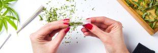 Cannabis récréatif : une consultation citoyenne lancée en France