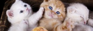 Maltraitance animale : la vente de chiens et de chats en animaleries interdite dès 2024