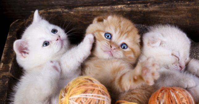 Maltraitance animale: la vente de chiens et de chats en animaleries interdite dès 2024