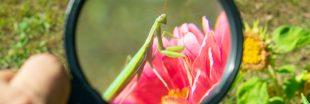 Observatoire National de la Biodiversité - Quels outils pour préserver le vivant ?