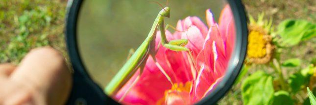 Observatoire National de la Biodiversité – Quels outils pour préserver le vivant?