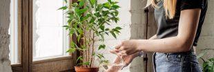 Bien arroser ses plantes d'intérieur et les sauver de la  'noyade'