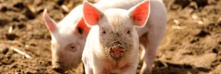 Enfin une étiquette 'bien-être animal' sur nos produits alimentaires !