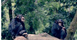 Épidémie: les animaux aussi pratiquent la distanciation physique