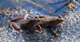 Espèces mal-aimées – Reptiles et amphibiens enfin mieux protégés en France métropolitaine