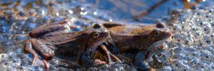 Espèces mal-aimées - Reptiles et amphibiens enfin mieux protégés en France métropolitaine