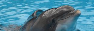 Parc Astérix : Femke, dauphin martyr de la captivité euthanasié