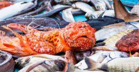 Pêche durable en Méditerranée: la France pourrait mieux faire