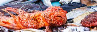 Pêche durable en Méditerranée : la France pourrait mieux faire
