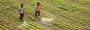 Hausse vertigineuse des intoxications et décès dus aux pesticides