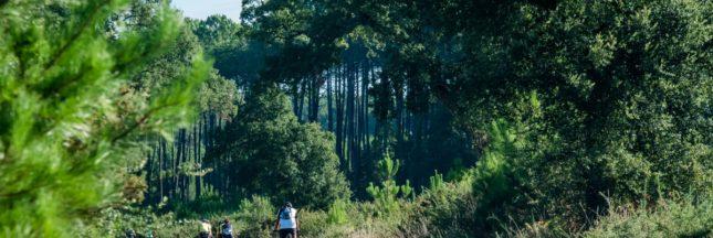 plantation rebellion planter des arbres