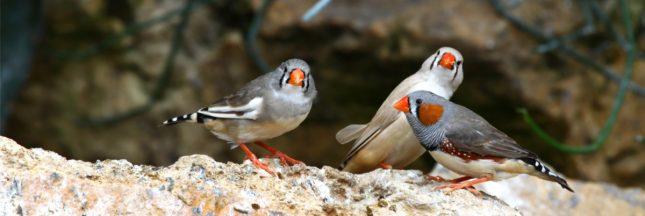 L'intelligence des oiseaux menacée par le bruit des humains