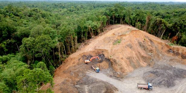 alimentation déforestation