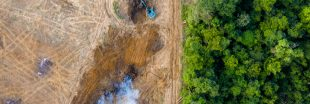 L'alimentation d'un occidental moyen coûte 4 arbres par an à la forêt