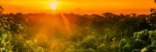 L'Amazonie a le cancer du poumon !