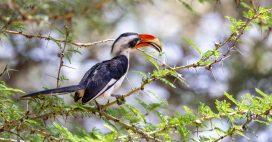 Biodiversité: une carte interactive pour trouver des espèces inconnues