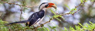 Biodiversité : une carte interactive pour trouver des espèces inconnues