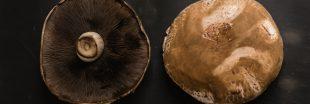 Portobello, le cousin géant du champignon de Paris