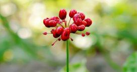 3 plantes pour aider la mémoire et la concentration