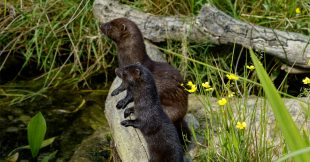 Liste rouge de la biodiversité : 1 espèce sur 5 menacée en France