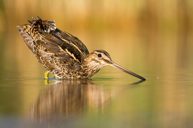espèces menacées france UICN