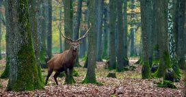 Les 7 plus belles forêts de France en images