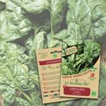 graine haricots verts