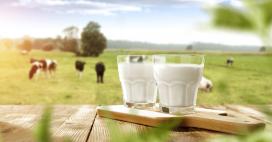 Origine du lait: la transparence n'est plus obligatoire