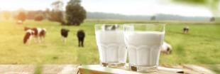 Origine du lait : la transparence n'est plus obligatoire