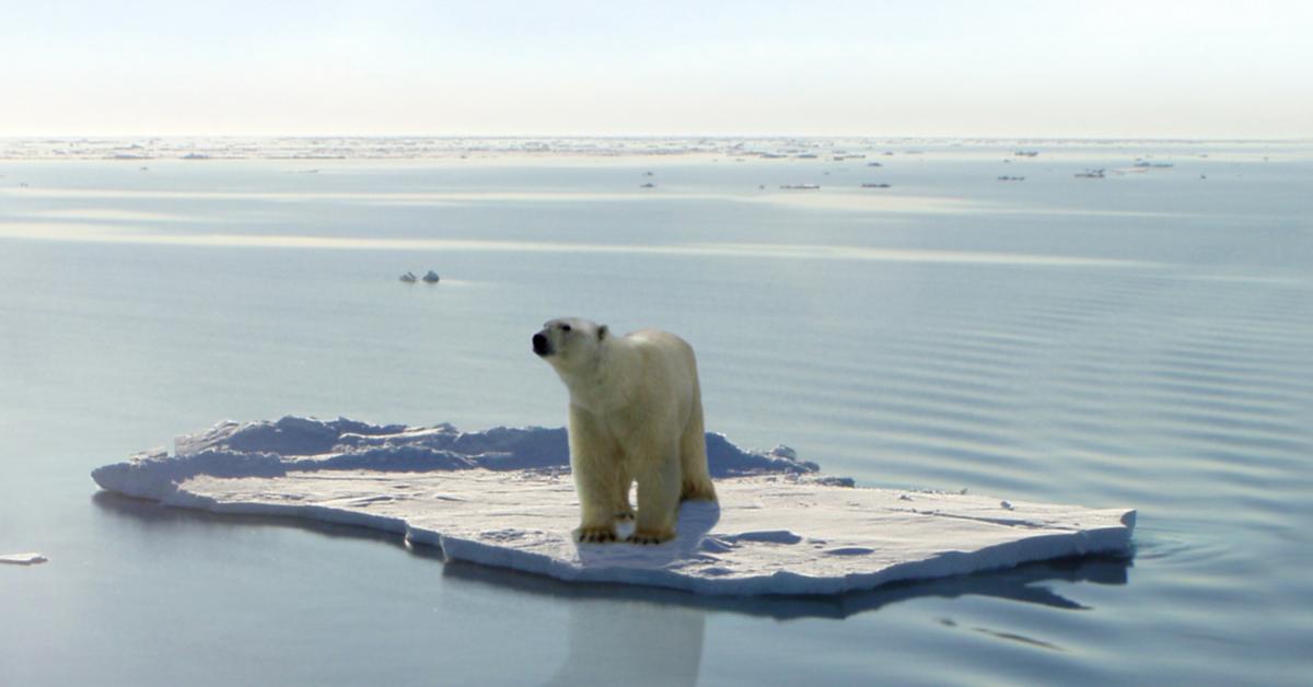 Réchauffement climatique : les ours polaires menacés par la famine