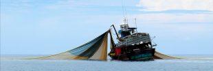 Pêche au chalut et aviation, une même empreinte carbone !