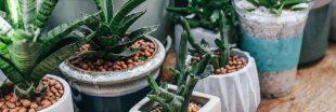 Plante en pot : nos conseils pour bien débuter