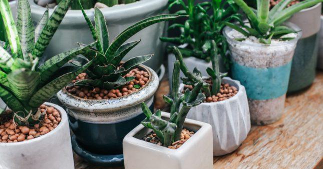 Plante en pot: nos conseils pour bien débuter